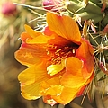 Orange And Yellow Cactus Flower by Michelle Cassella