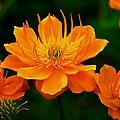 Orange And Yellow by Eric Tressler