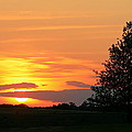 Landscape Photograph Of A Fiery Orange Sunset And Tree Silhouette by Angela Rath