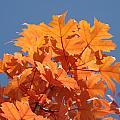Orange Autumn Leaves Art Prints Blue Sky by Baslee Troutman