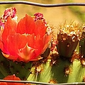 Orange Cactus Flower With Fence by Michelle Cassella