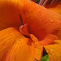 Orange Canna by Peg Toliver