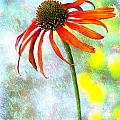 Orange Coneflower On Green And Yellow by Carol Leigh