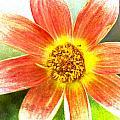 Orange Dahlia On Green by Carol Leigh