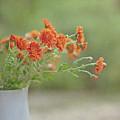 Orange Flower by Pamela N. Martin