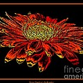 Orange Gerbera Daisy With Chrome Effect by Rose Santuci-Sofranko