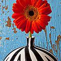 Orange Gerbera Mum by Garry Gay