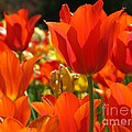 Orange Glow by Ashley M Conger