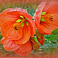 Orange Hibiscus Flowers by Mother Nature