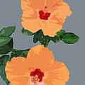 Orange Hibiscus Twins by Karen Nicholson
