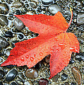 Orange Leaf by Gerry Bates