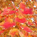 Orange Leaves 2 by Rod Ismay