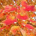 Orange Leaves 3 by Rod Ismay