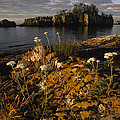 Orange Lichen-covered Rocks At Isle by Phil Schermeister