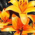 Orange Lilies by Elaine Plesser