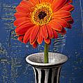 Orange Mum by Garry Gay