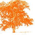 Orange Oak by Alan Look