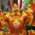 Orange Orchid Clown by Wanda J King