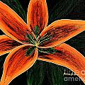 Orange Oriental Lily by Barbara Griffin