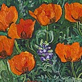 Orange Poppies by Christina Plichta