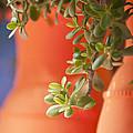Orange Pots Of The Jardin Marjorelle Morocco by Beth Riser