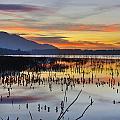 Orange Reflections by Guido Montanes Castillo