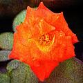 Orange Rose Blossom by Ester  Rogers