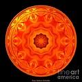 Orange Rose Kaleidoscope Under Glass by Rose Santuci-Sofranko