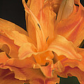 Orange Ruffles by Teresa Mucha