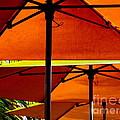 Orange Sliced Umbrellas by Karen Wiles