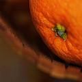 Orange Sunshine by Susan Capuano