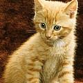 Orange Tabby Mixed Breed Kitten  by Larry Allan