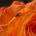 Orange With Visitor by Steve Purnell