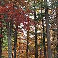 Orange Woods by Loretta Pokorny
