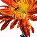 Orange You Happy by Susan Smith