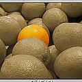 Oranges S.c.  by Debbie Portwood