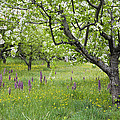 Orchard With Flowering Orchids by Konrad Wothe