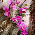 Orchid - Tropical Passion by Mike Savad