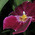 Orchid 252 by Terri Winkler