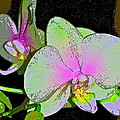 Orchid 5 by Pamela Cooper