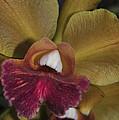 Orchid 85 by Terri Winkler