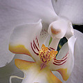 Orchid Close Up Two by Nancy Griswold