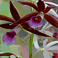 Orchid Sonata by Suzanne Gaff