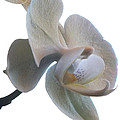 Orchids 1 by Mike McGlothlen