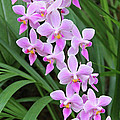 Orchids 15 by Becky Lodes