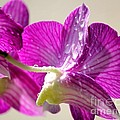 Orchids And Raindrops by Theresa Willingham