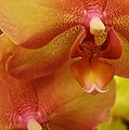 Orchids Delight by Bruce Bley