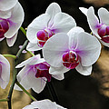 Orchids For Your Day by Timothy Johnson