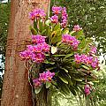 Orchids On Tree by Kathy Schumann