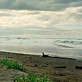 Oregon Coast 17 by Deahn      Benware